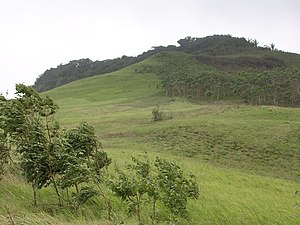 Wind swept grasslands and Eucalyptus alba woodlands below Mt Manucoco, Atauro 24 Dec 2003.jpg