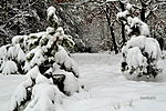Winter memories in the first day of spring (16259563603).jpg