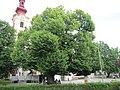 Winterlinde Stadtpfarrkirche Leibnitz.JPG