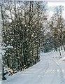 Wintery scene on the track near to Lynwilg - geograph.org.uk - 1347749.jpg