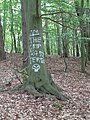 Wolin National Park-act of vandalism, painted tree.jpg