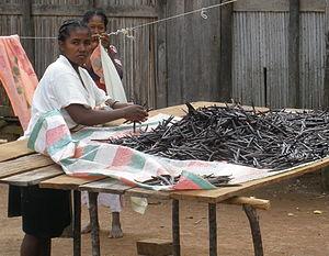 Malagasy cuisine - Malagasy women sorting vanilla in Sambava, Madagascar