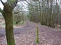 Woodland paths and markers - geograph.org.uk - 1740649.jpg