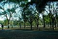 Yoyogi park 01.jpg