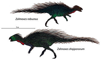Zalmoxes - Illustrations of Z. robustus and Z. shqiperorum in scale
