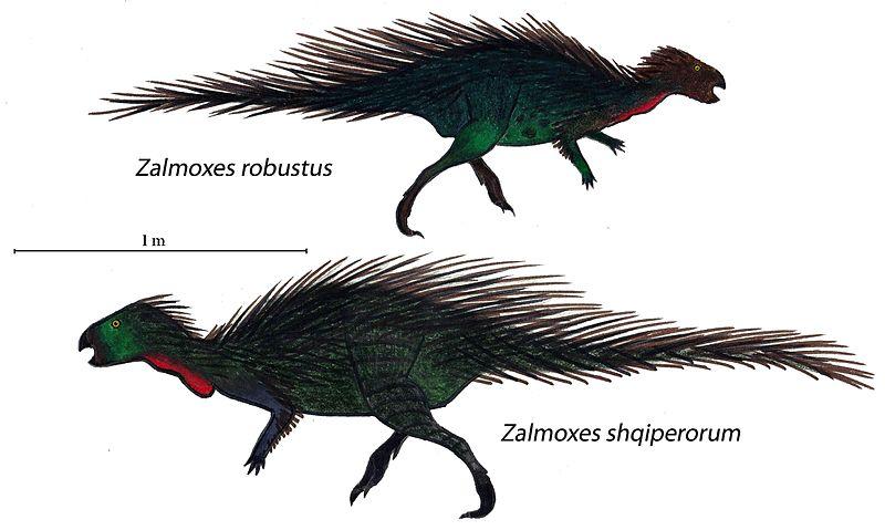 File:Zalmoxes dichotomy.jpg