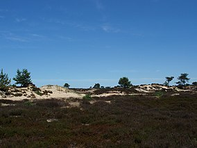 Zand - Drents-Friese Wold.jpg