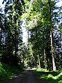 Zell a.H., Grosser Hansjakobsweg, Etappe 3 Oberharmersbach - Zell 12.jpg