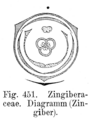 Zingiber Blütendiagramm.png