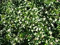 Zmatek květů 1.JPG