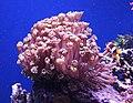Zootopia aquarium 5.jpg
