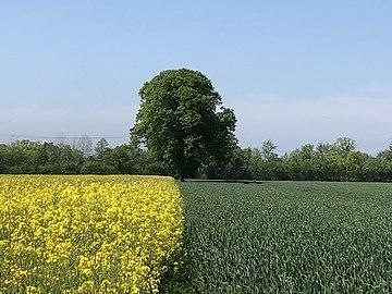 Zwischen zwei Feldern.jpg