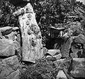 """""""Čok"""" (z """"žbelami"""") in vül za žbele (čebele), Labor 1950 (2).jpg"""