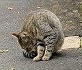 (1)Glebe cat.jpg