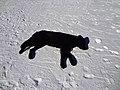 (Not dead) Dog chileno - Vale Nevado - Chile (14876070883).jpg