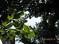 Đà Nẵng năm 2009, cây lá.jpg