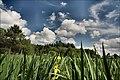 Łopuchówka - panoramio (78).jpg