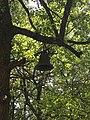 Ѕвоно во Светотодорскиот манастир.jpg