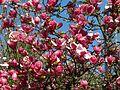 Ботанічний сад ім. І.Фоміна IMG 8316.jpg