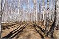 Весна на Южном Урале. - panoramio (6).jpg