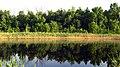 Вид на Старобердянське лісництво через Молочну 5.jpg