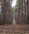 Заповедный лес.jpg