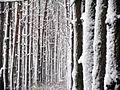 Заснеженный лес - panoramio.jpg