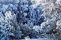 Зимняя сказка в Перовском лесничестве.jpg