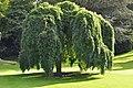 Кембридж - panoramio - Андрей Бобровский (2).jpg