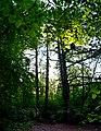 Колекція лісовода Вінтера DSC 0043 stitch.jpg