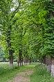 Лизогубівський (Седнівський) парк, Чернігівський район, смт. Седнів.jpg