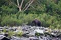 Медведь на берегу Камонного.jpg