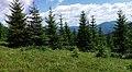 Поляна с черникой - panoramio.jpg