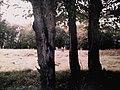 Підгорецький парк, Бродівський р-н, с. Підгірці..jpg