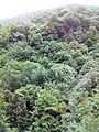Смоларски водопад 49.jpg