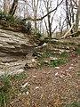 Тисо-самшитовая роща,1 км от Хосты вверх по течению реки, Хостинский район, Сочи, Краснодарский край.jpg
