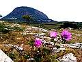 Фото з Червоного каменю на г.Аю-Даг.jpg
