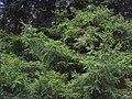 Գյուլագարակի արգելավայր, Դենդրոպարկ (5).JPG