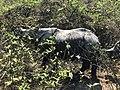 जंगल भ्रमणको दौरान देखिएको गैंडाको तस्विर.jpg