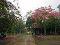 中山大学 - Sun Yat-sen University - 2015.12 - panoramio.jpg
