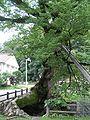 兵庫県丹波市柏原 木の根橋P7215540.jpg
