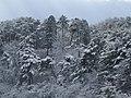 冬のますがた - panoramio (4).jpg