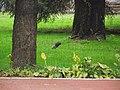 吉林医药学院的一只松鼠DSCF0056 - panoramio.jpg