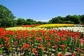 百合が原公園(Yurigahara park) - panoramio (8).jpg