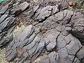 馬屎州岩石3.jpg