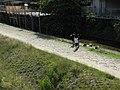 鴨川 - panoramio (1).jpg