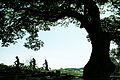 느티나무.jpg
