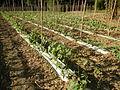 09681jfSan Rafael Bulacan Chapel Diliman Paddy Vegetable Fields Roadsfvf 05.JPG