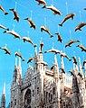 1000 delfini a Miano- 1996.jpg