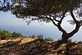 13260 Cassis, France - panoramio (5).jpg